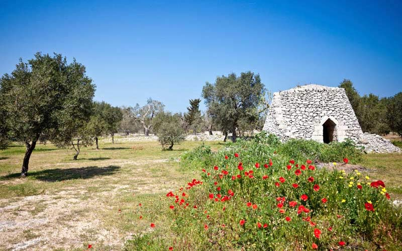 Apulia's-Green-Gold_photo